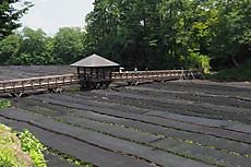 P7200521