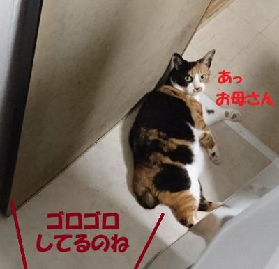 Dsc_0001_3