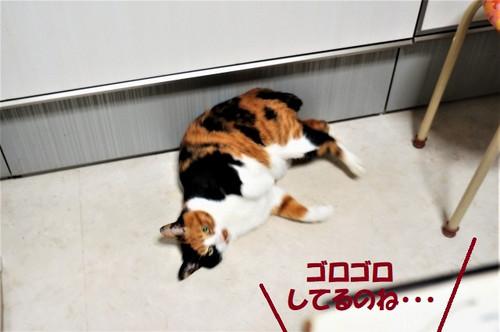 Dsc02285